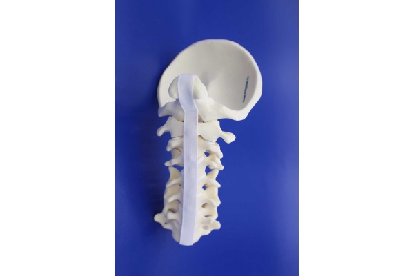 CERVICAL SPINE OCCIPUT-C7 SOLID FOAM