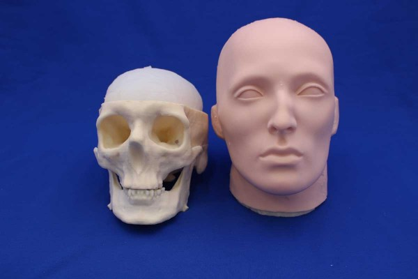 SKULL SOLID FOAM AND FACE