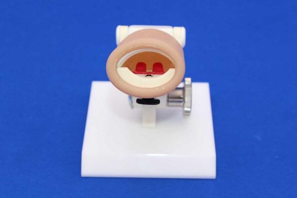 Simulateur de suture de fentes vélopalatines