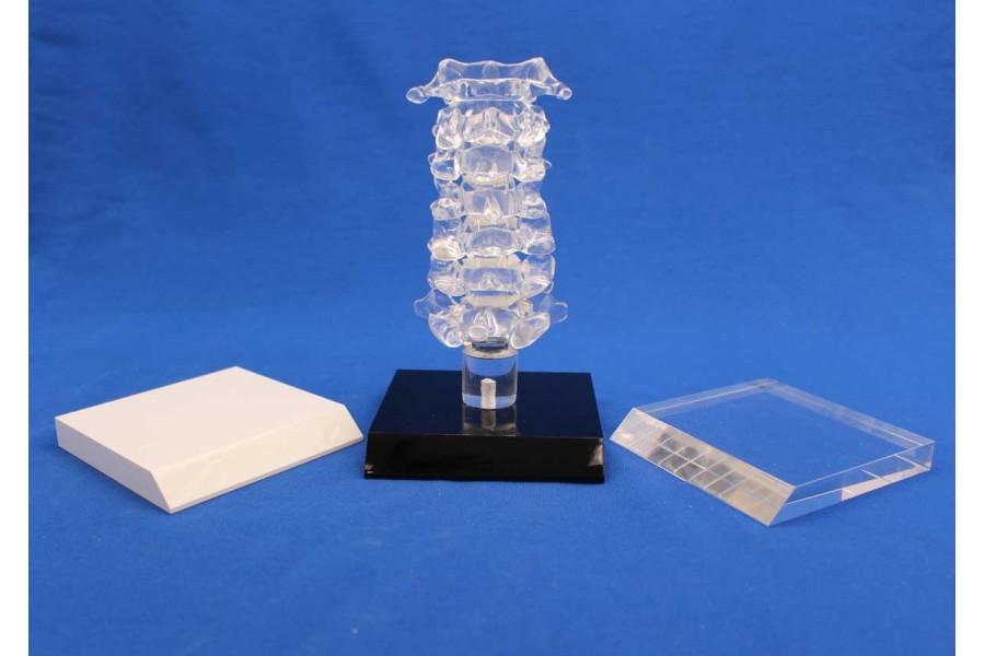 Clearbone Cervical C1/C7 avec base