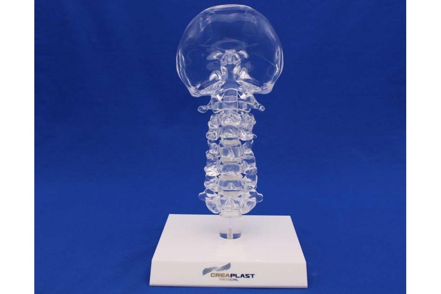 Clearbone Cervical Occiput / C7 avec base