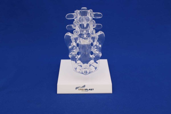 Clearbone L4/Sacrum with base