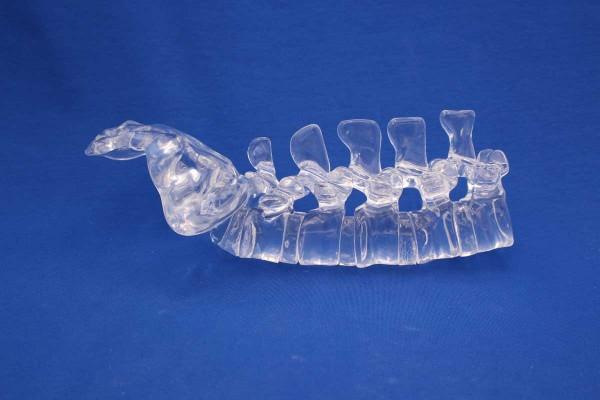 Clearbone L1/Sacrum