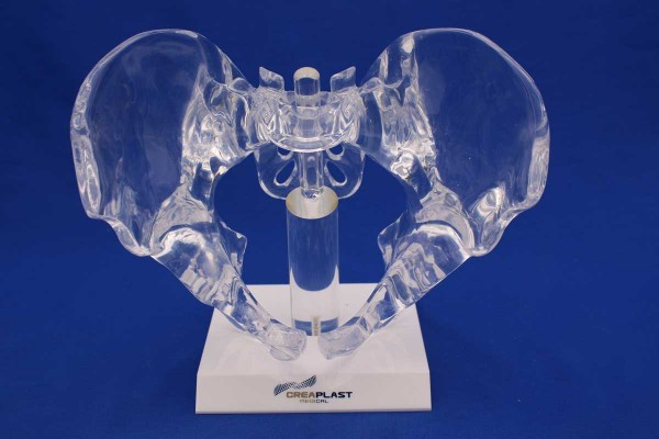 Clearbone pelvis complet avec base